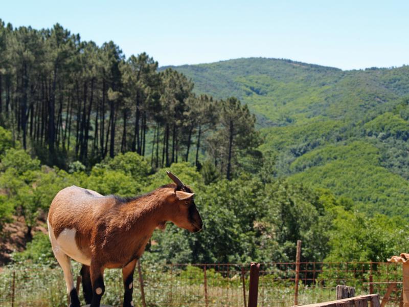 IMG5 Uma experiência para viver na Extremadura