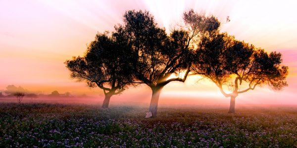 2n Premi color Sergi Torres e1523983591590 Formentera: Sem pressa