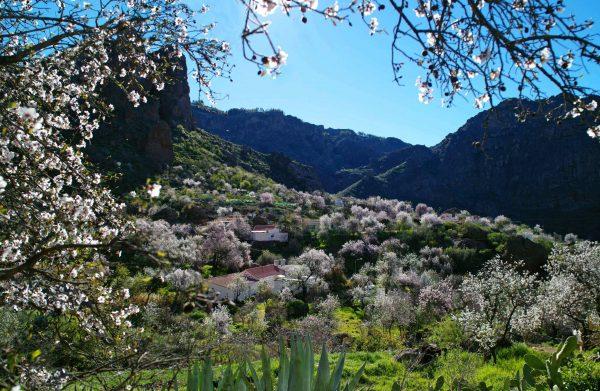 Interior de la isla e1555095482527 Gran Canaria: o destino escolhido pelas famílias