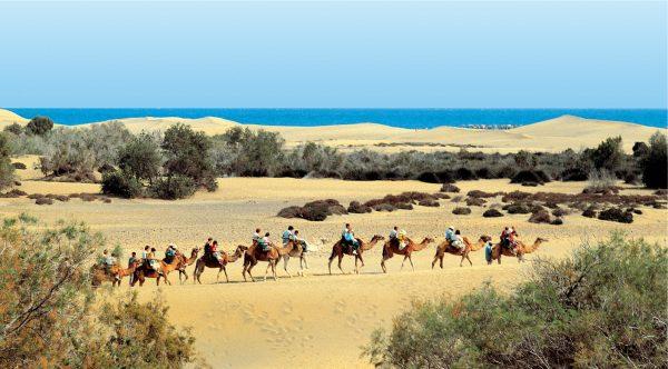 camellos e1555095176822 Gran Canaria: o destino escolhido pelas famílias